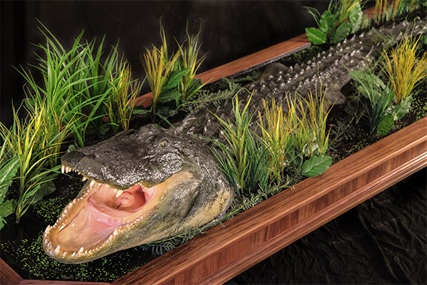 Jonas Brothers Taxidermy Alligator