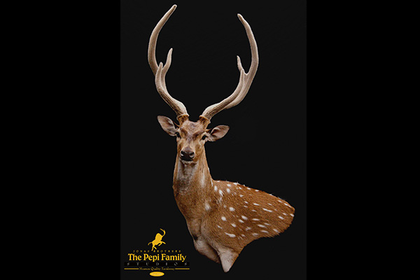 Jonas Brothers Taxidermy Axis Deer
