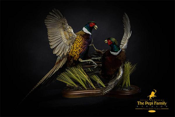 Jonas Brothers Taxidermy Pheasants