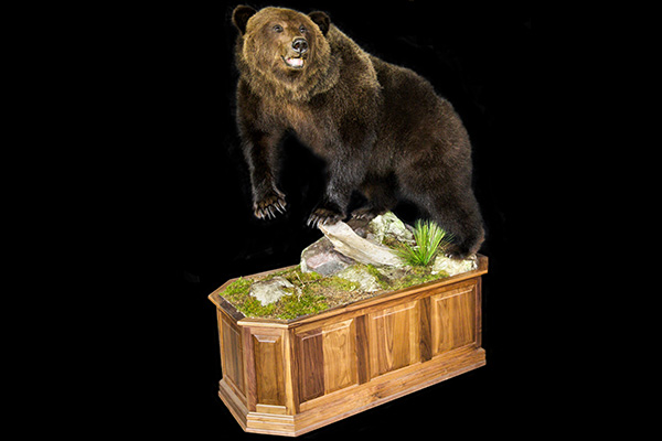 Jonas Brothers Taxidermy Grizzley