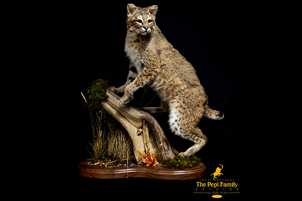 Jonas Brothers Taxidermy Bobcat