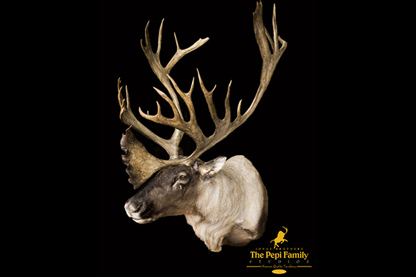 Jonas Brothers Taxidermy Caribou