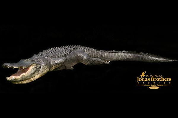 Jonas Brothers Taxidermy Crocodile