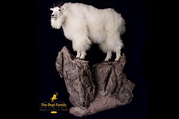 Jonas Brothers Taxidermy Mountain Goat