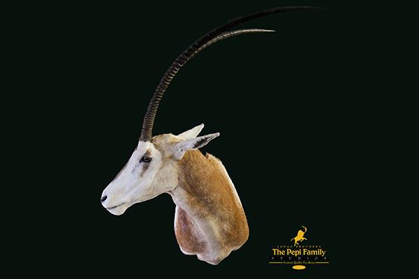 Jonas Brothers Taxidermy Oryx