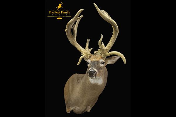 Jonas Brothers Taxidermy Velvet Deer