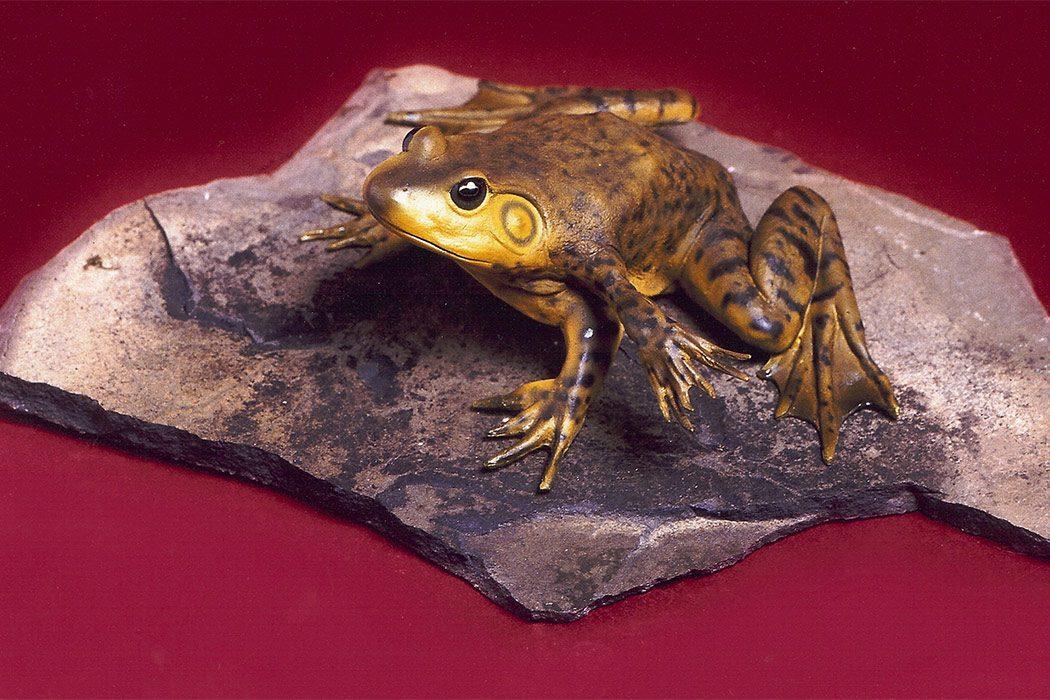 Jonas Brothers Taxidermy Frog
