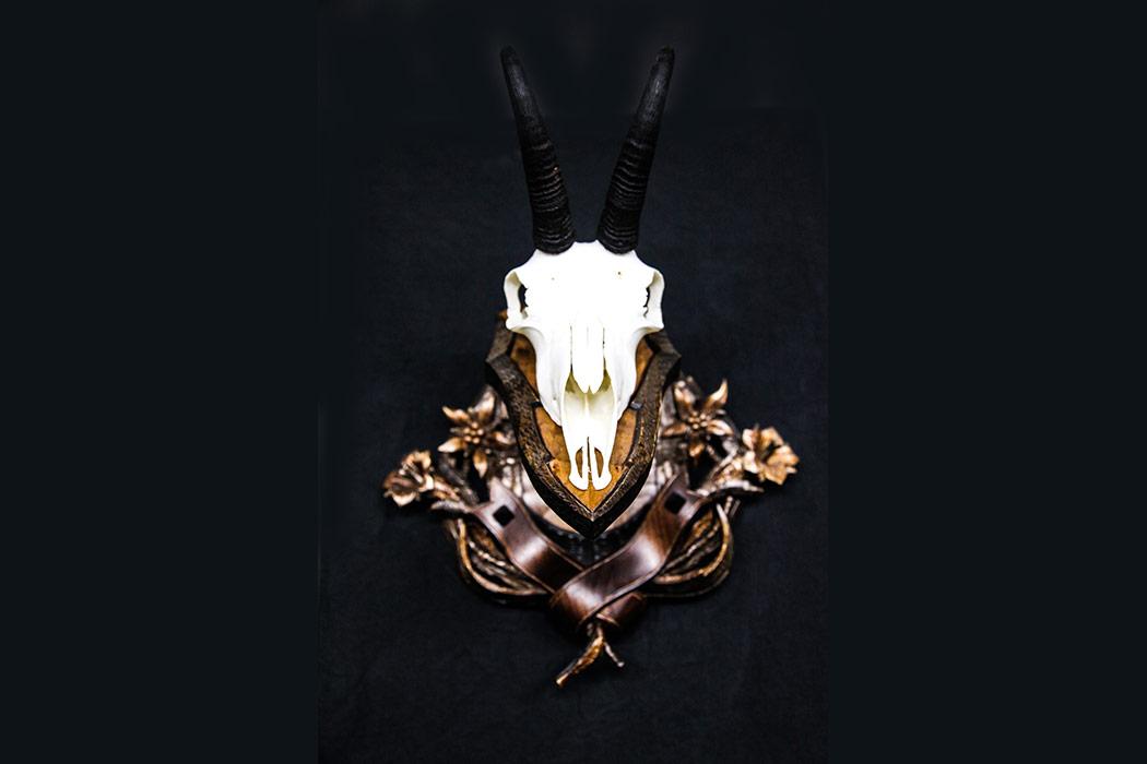 Jonas Brothers Taxidermy Chamois Skull