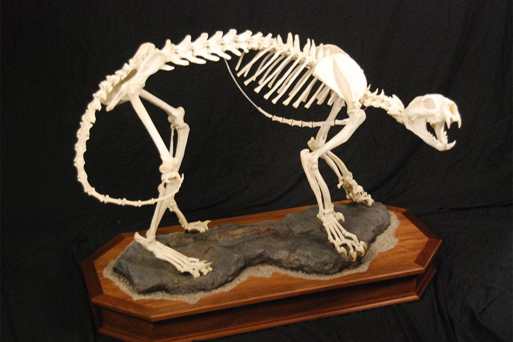 Jonas Brothers Taxidermy Skeleton
