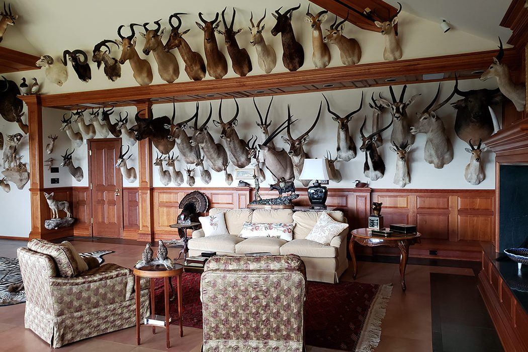 Jonas Brothers Taxidermy Trophy Room Design