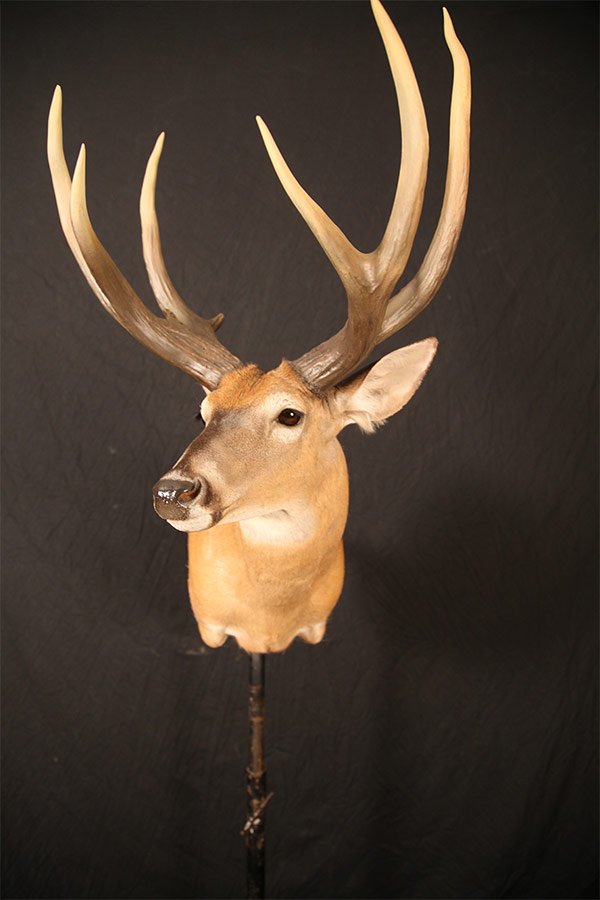 Jonas Brothers Taxidermy Marsh Deer