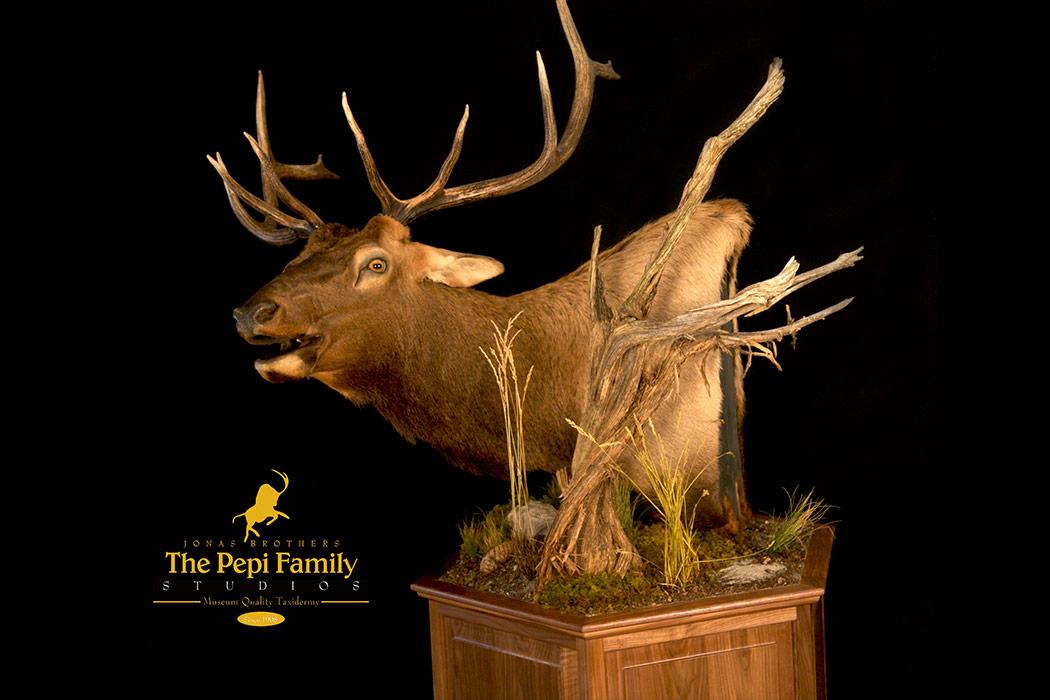 Jonas Brothers Taxidermy Elk pedestal