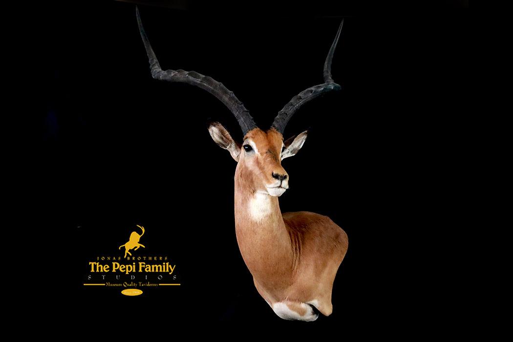 Jonas Brothers Taxidermy Impala Pedestal