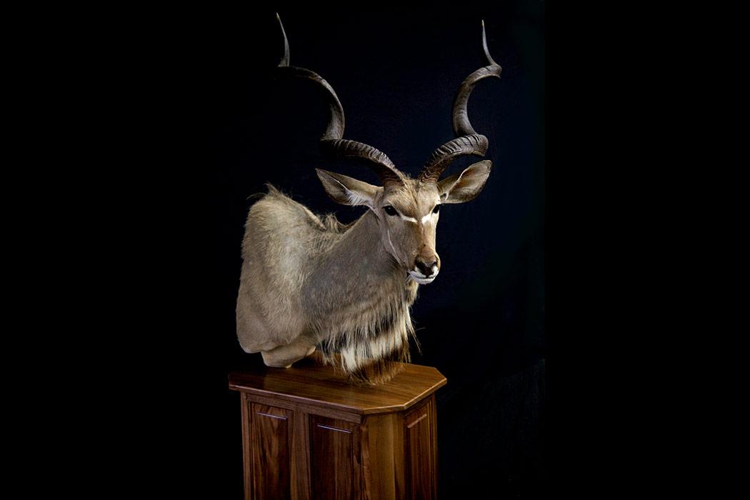 Jonas Brothers Taxidermy kudu pedestal