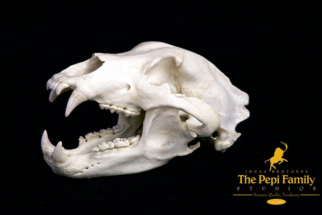 jbs-open-mouth-skull
