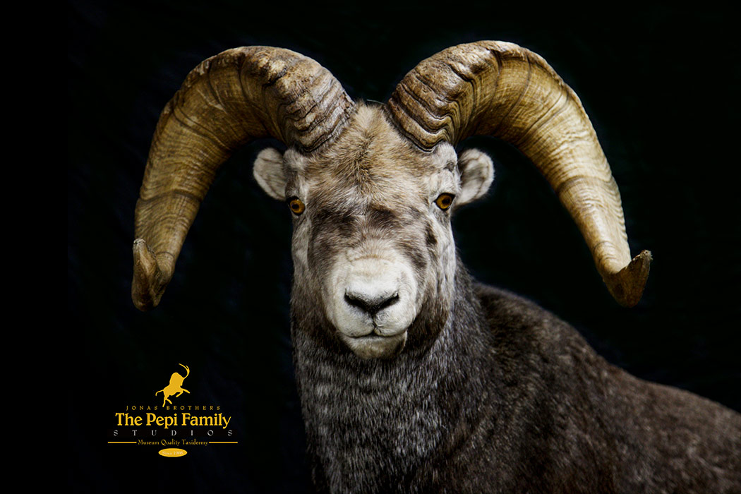 Jonas Brothers Taxidermy stone sheep